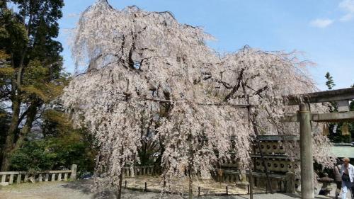 10354大石神社_convert_20140405132007