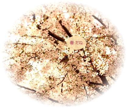 お花見競馬7