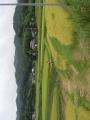 千葉の田園