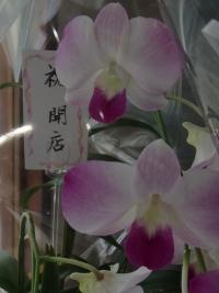 P7120056.jpg