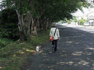 朝桜通り1