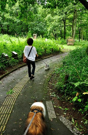野草園夏2