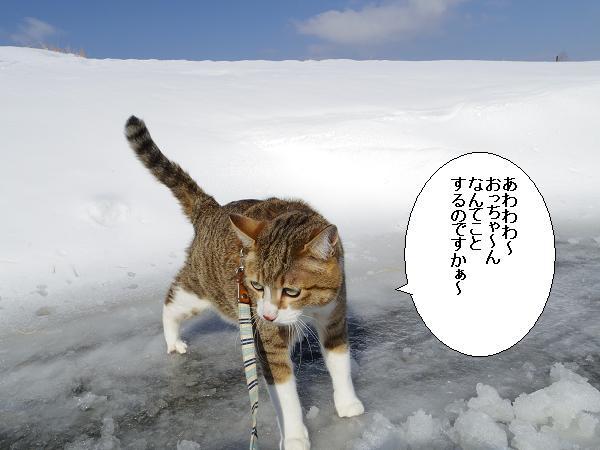 積雪観測隊5