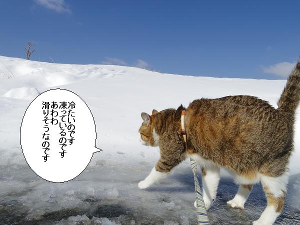 積雪観測隊6