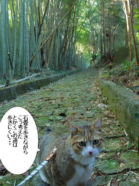 草枕の道4