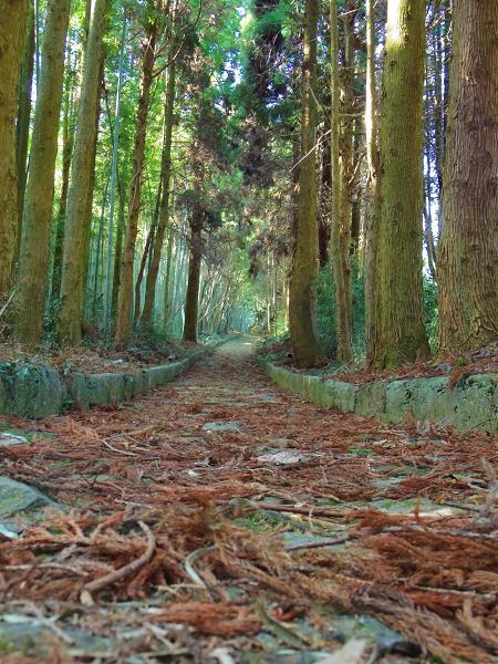 草枕の道1