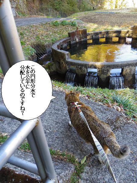 円形分水4