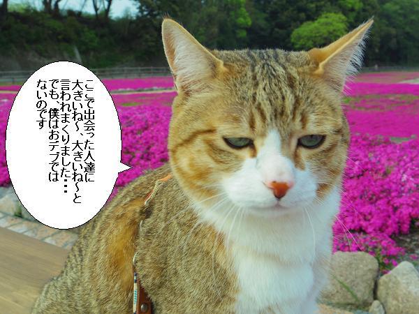 芝桜公園9