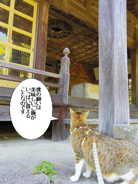 大将軍神社7