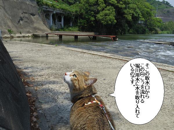 山田井堰5