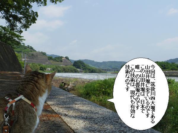 山田井堰2