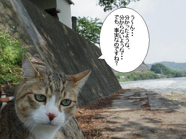 山田井堰4