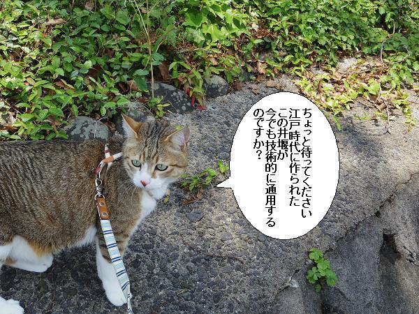 山田井堰3