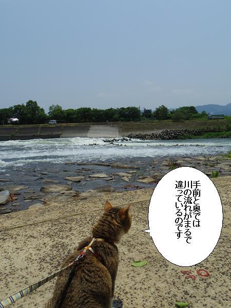 山田井堰7