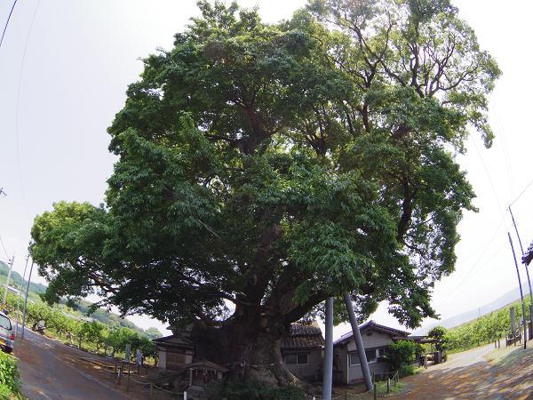 山田井堰9