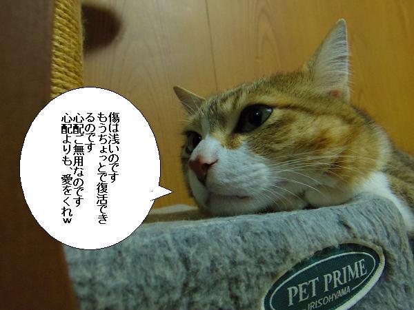 ロコ便り5