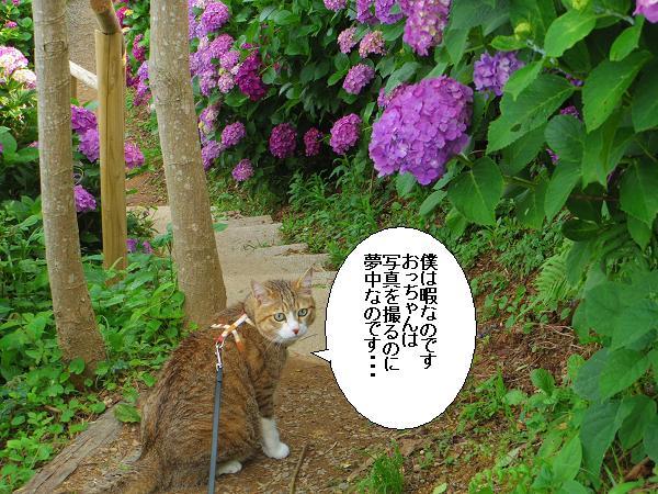 桃源郷岬8