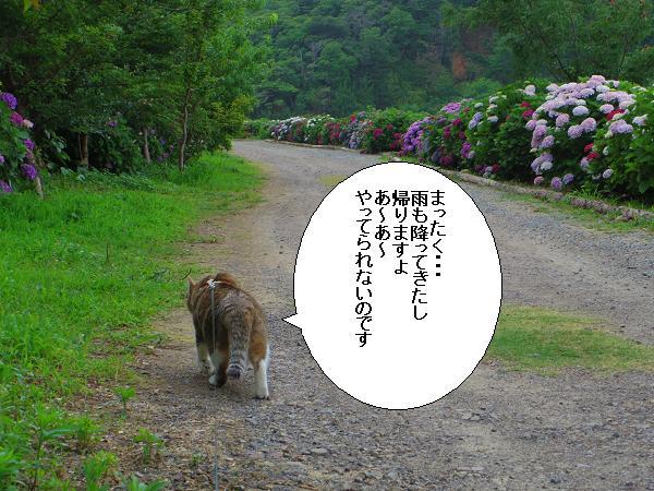 桃源郷岬15
