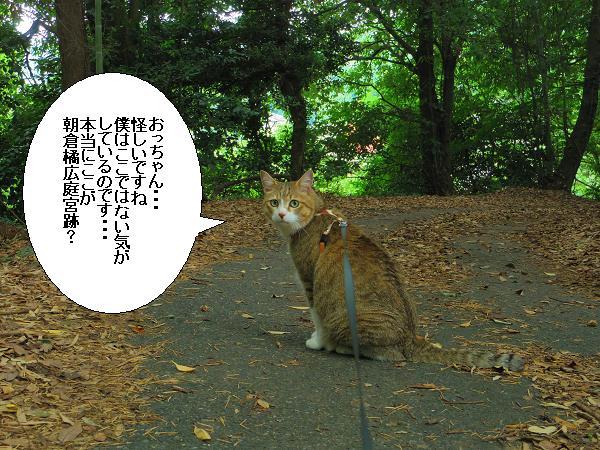朝倉橘広庭4