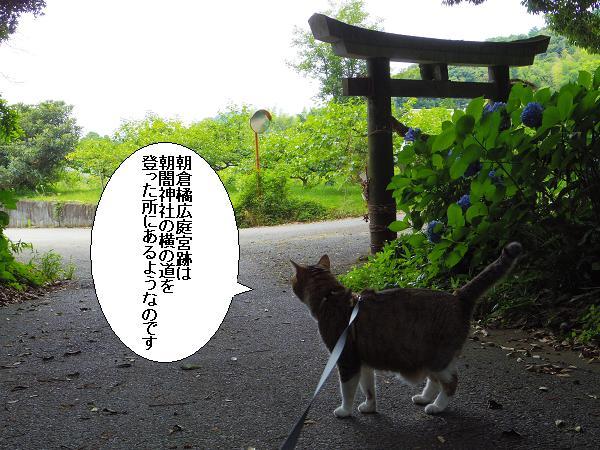 朝倉橘広庭3