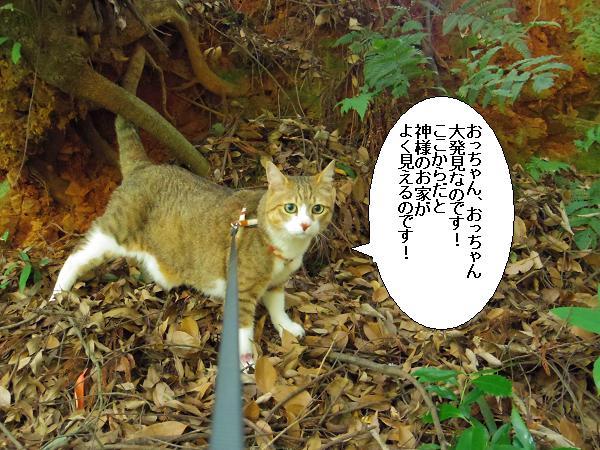 朝倉橘広庭10