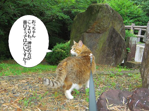 朝倉橘広庭7
