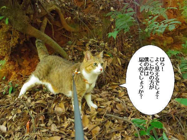朝倉橘広庭11