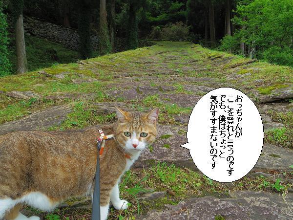 末廣神社3