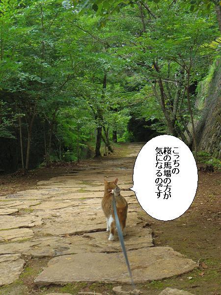 末廣神社11