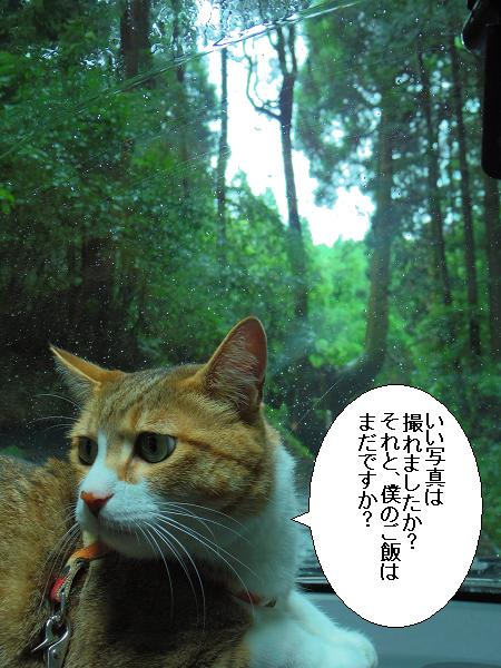 護王さんの杉11