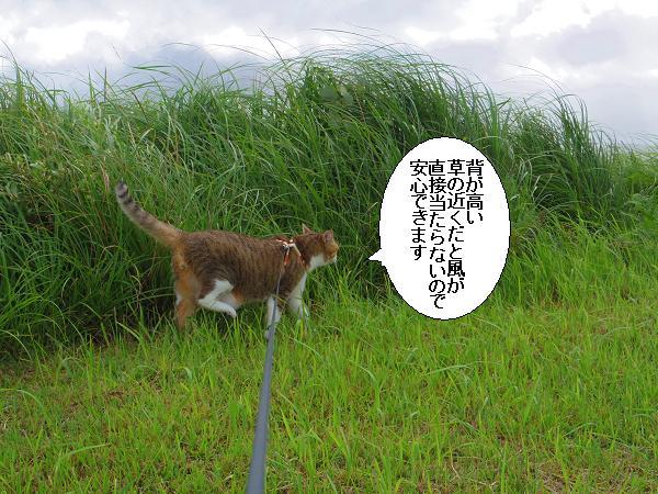 川内峠15