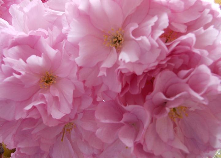 スクリーンショット 2014-04-06 14.03.38