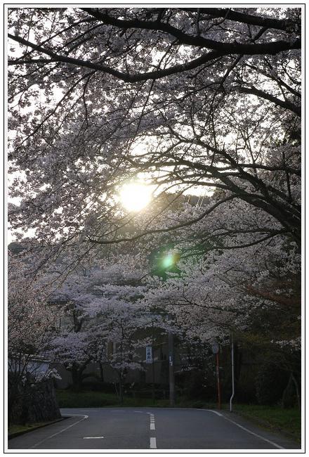2014年4月1日 下北山スポーツ公園 (1)