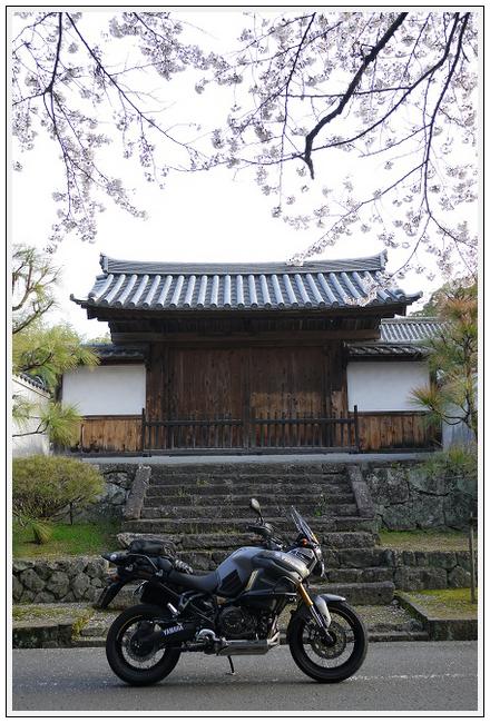 2014年4月1日 下北山スポーツ公園 (3)