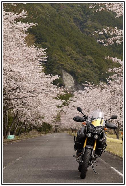 2014年4月1日 下北山スポーツ公園 (13)