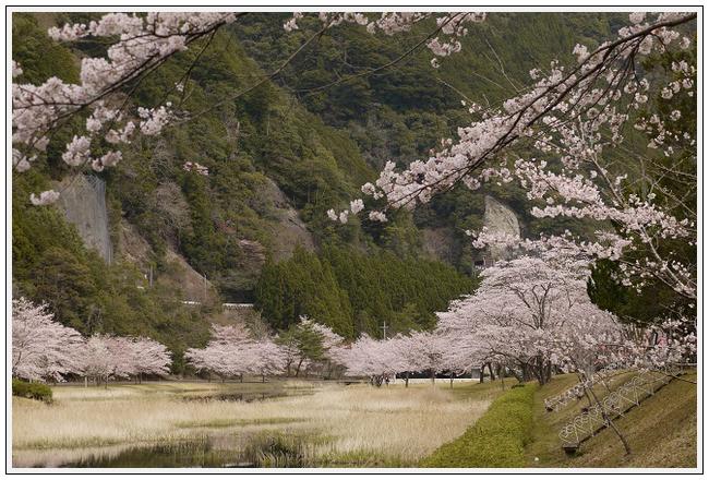 2014年4月1日 下北山スポーツ公園 (15)