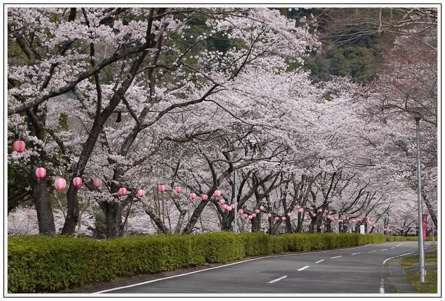 2014年4月1日 下北山スポーツ公園 (20)