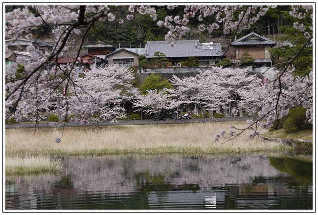 2014年4月1日 下北山スポーツ公園 (21)