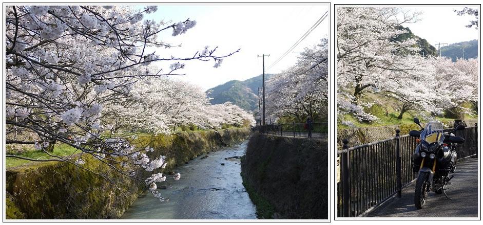 2014年4月1日 下北山スポーツ公園 (32)