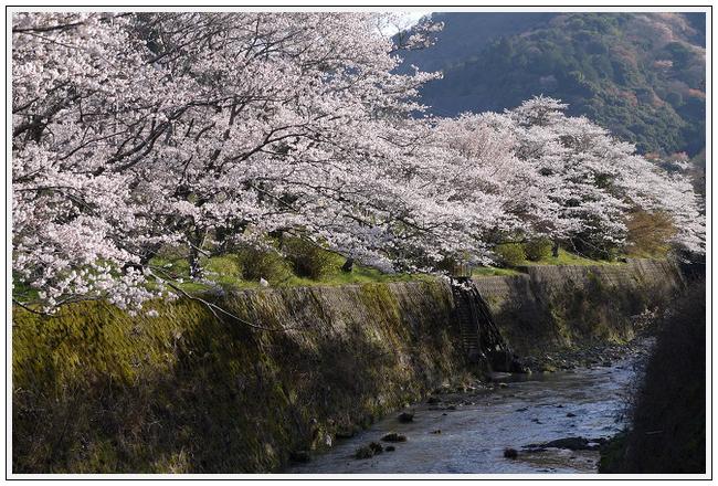 2014年4月1日 下北山スポーツ公園 (33)