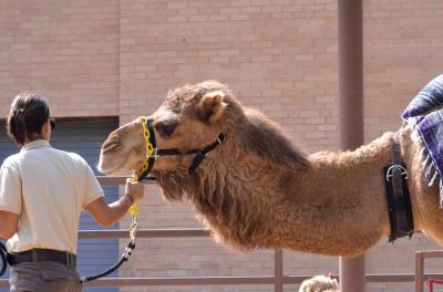 Camel_convert_20140720183913.jpeg