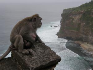 Monkey_convert_20140612144846.jpg