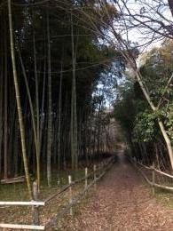 bamboo1_convert_20140220221237.jpg