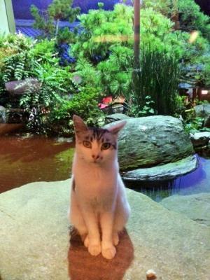 cat1+(2)_convert_20140729152636.jpg