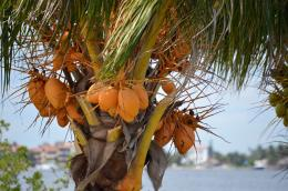 coconut_convert_20140225162130.jpg