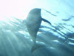 dolphin1_convert_20140321212822.jpg