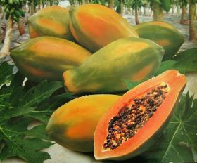 papaya_convert_20140527094615.jpg