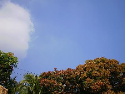 P5293561.jpg