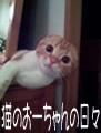 猫のおーちゃんの日々