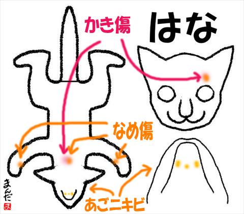 #256_7_はな